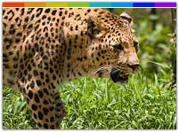 North East India Wildlife, North East India Wildlife Sanctuary